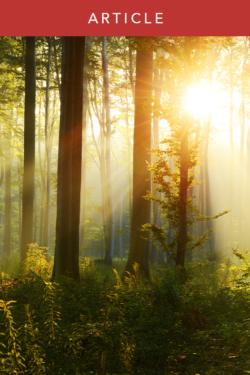 How to Grieve: Pain, Gratitude, & Peace